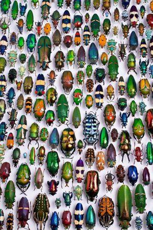 Beetles Karlsruhe Museum.jpg