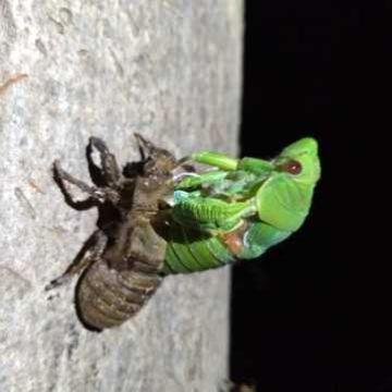 Thumbnail for The bugs bacteria abhor